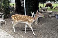 biche-parc-animalier-toulouse